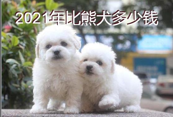 2021年比熊犬多少钱