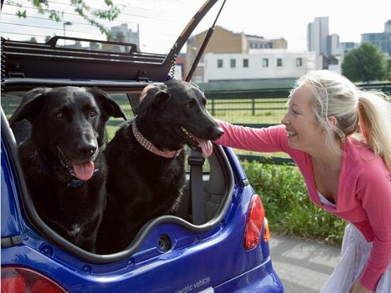宠物狗坐副驾罚款又扣分