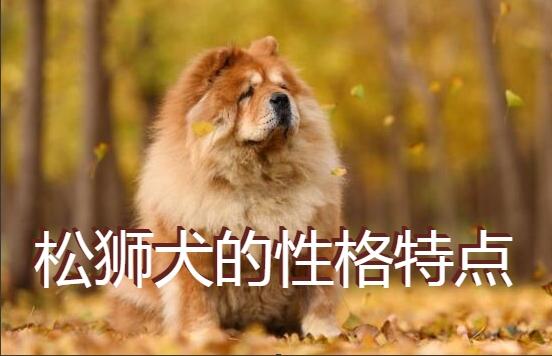 松狮犬的性格特点
