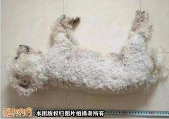安徽淮南7旬老人3次毒杀22条宠物犬被判3年!