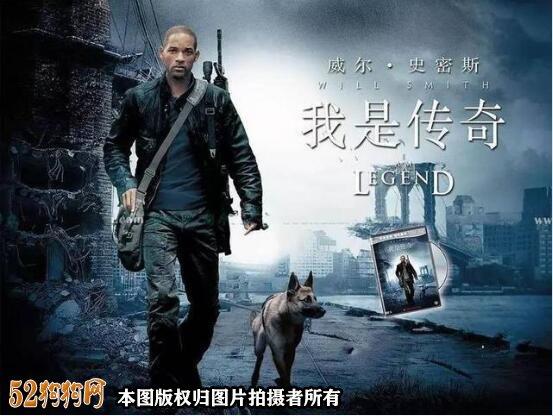 德国牧羊犬电影1
