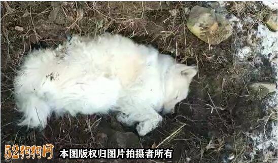 李沧牛毛山上多条宠物狗离奇死亡!该小区有多只狗离奇死亡!