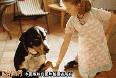 狗狗发抖怎么回事?狗狗
