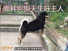农村老人说有的狗狗旺财旺主人!哪些特征狗狗天生旺主人呢?