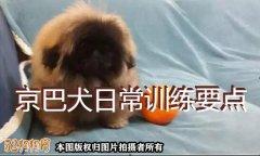京巴狗训练、京巴犬日常训练要点!