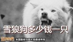 雪狼狗介绍、雪狼狗多少钱一只?