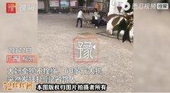 广西女子保护4岁女孩被斗牛犬咬伤!女子三个手指被咬!