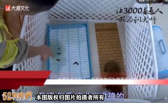 训练狗狗视频截图