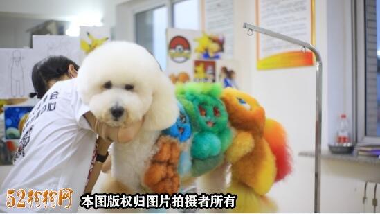 宠物美容图片2