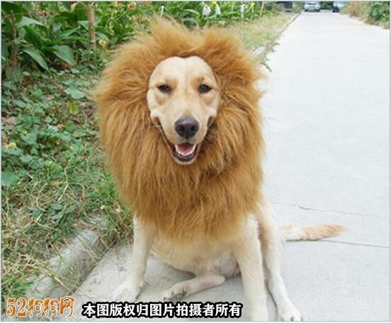 宠物美容图片3