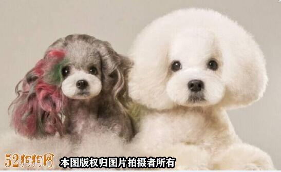 宠物美容图片5