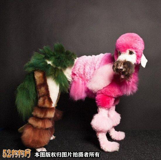 宠物美容图片7