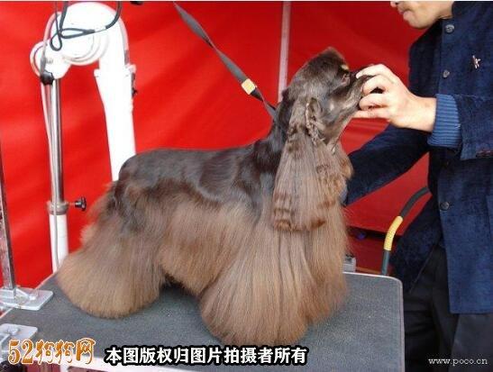 宠物美容图片13