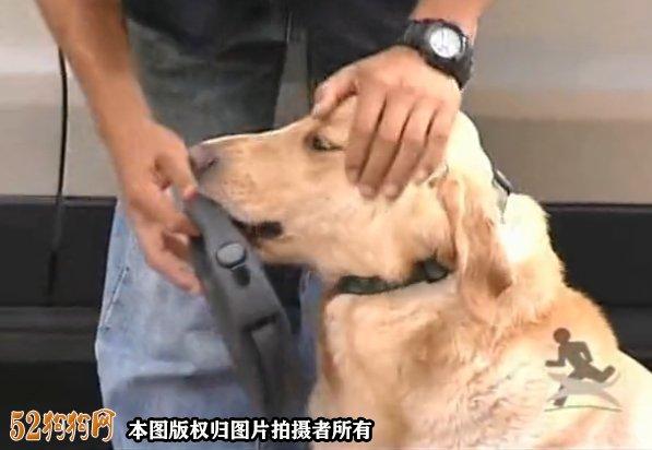 训狗视频教程全集、狗狗坐下等待卧下训练