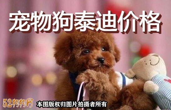 宠物狗泰迪价格图
