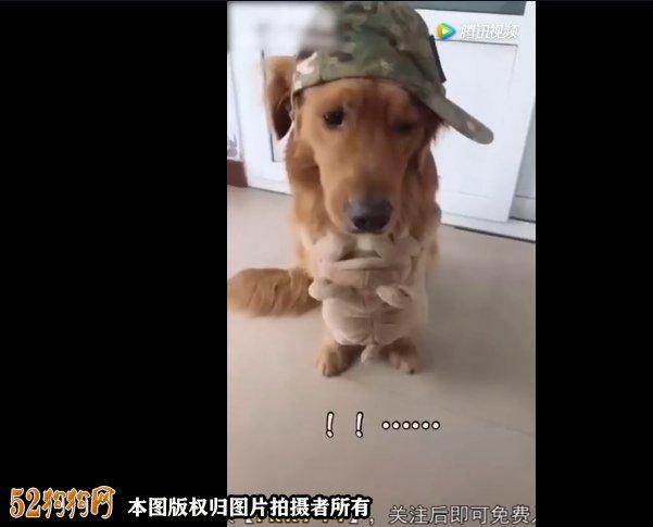 配狗搞笑视频、狗狗搞笑配音小破肚皮我不负责!