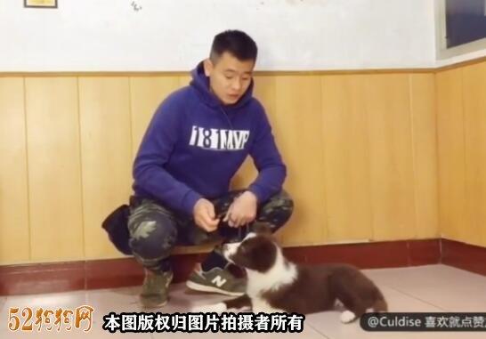 怎么教狗狗趴下视频?5分钟教会狗狗趴下!