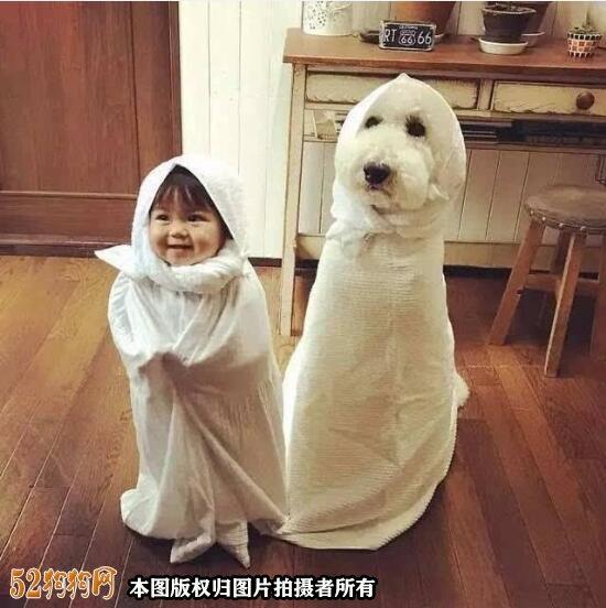 大贵宾犬图片8