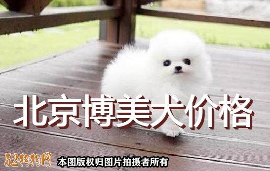 北京博美犬价格图