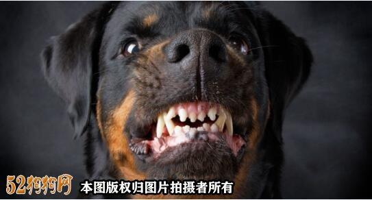 美国科学家们警告宠物狗对人类的危险!您怎么看?