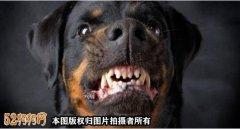 美国科学家们警告宠物狗