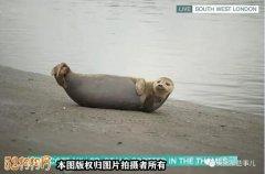 英国网红小海豹被宠物狗
