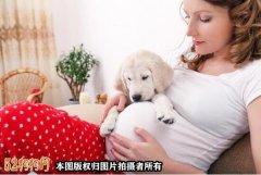 孕妇能养狗吗?宠物犬与