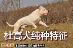 杜高犬纯种、纯种杜高犬怎么分辨?