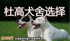 杜高犬舍、杜高犬