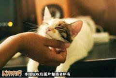五一长假,爱狗人士北京