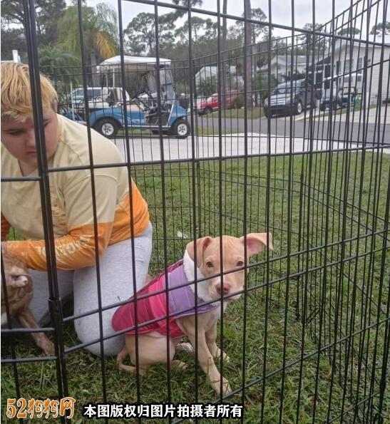美国11岁少女冲入火场救自己的宠物狗致死!