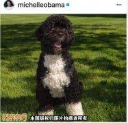 奥巴马宠物犬因癌症去世
