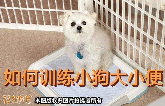 如何训练小狗大小便图1