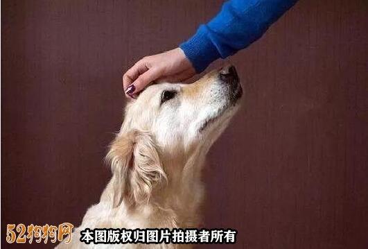 如何训练小狗大小便图4