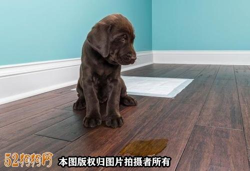怎么样训练小狗大小便图2