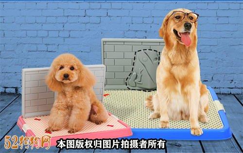 怎么样训练小狗大小便图3