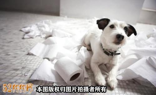怎么样训练小狗大小便图5