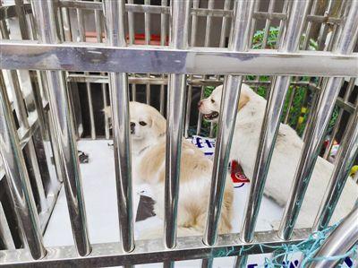 因种种原因无法继续养狗怎么办?需建立正规流浪犬收容机构!