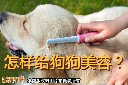 怎样给狗狗美容图1