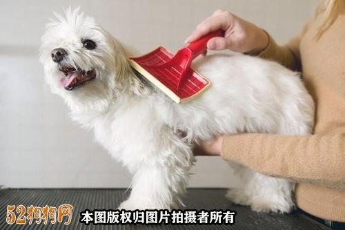 怎样给狗狗美容图2