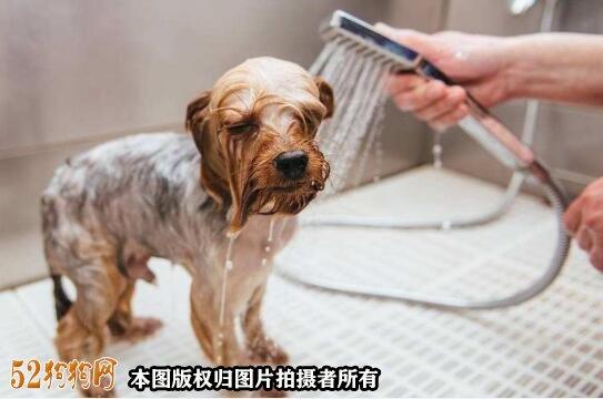 怎样给狗狗美容图3