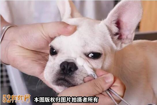 怎样给狗狗美容图6