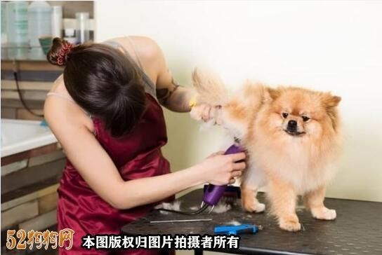 怎样给狗狗美容图7