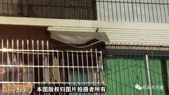 乐山城区一宠物狗楼上坠亡!险些砸中行人!
