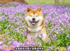 狗狗笑的图片、狗狗治愈系笑容图片