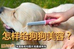 怎样给狗狗美容?【技巧】
