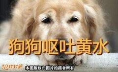 狗狗呕吐黄水怎么回事?