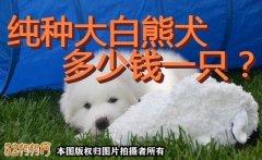 纯种大白熊犬多少钱一只?