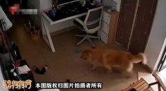 广州宠物狗误食香肠后隔