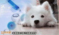 网红宠物狗疑似医院看病